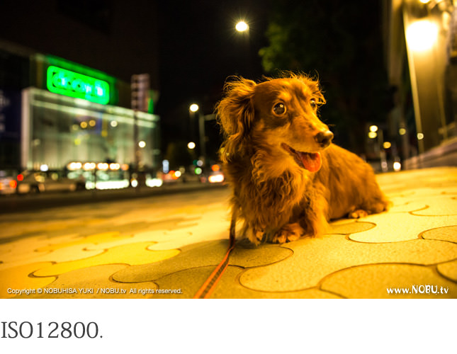 NOBU.tv : Canon EOS-1D X