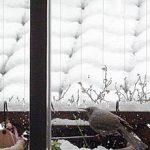 原宿は雪でした