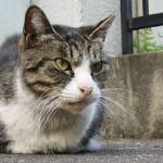 原宿野良猫日記-5