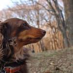 代々木公園-散歩