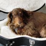 Gibson Les Paul BFG 番外編