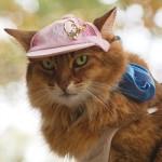 ゴージャス猫