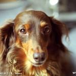 Leica DR SUMMICRON 1:2 / 50mm