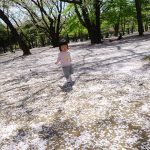 代々木公園-桜(4/10現在)