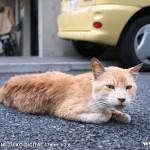 原宿野良猫日記-11
