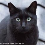 我が輩は黒猫である