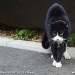 原宿野良猫日記