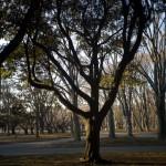冬の代々木公園