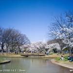 代々木公園の桜(2012年4月9日現在)