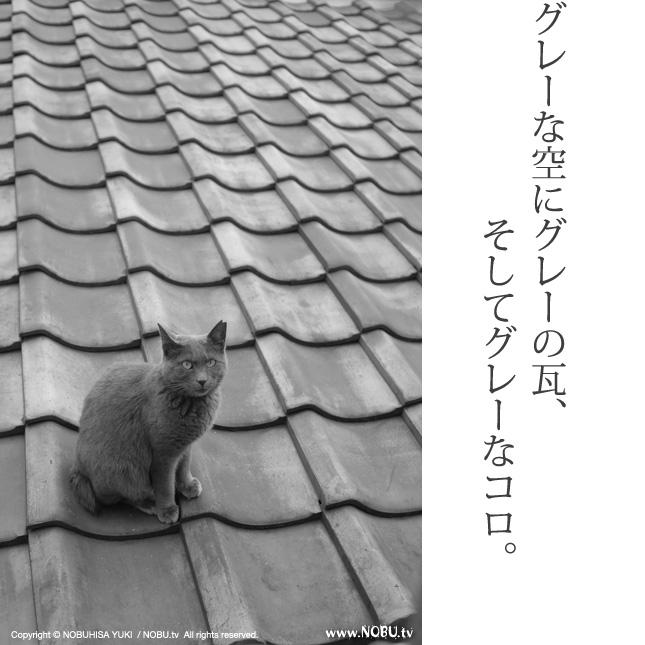 >前の記事