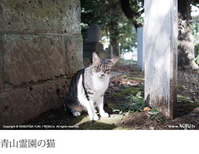 Leica X2 試し撮り(晴天)