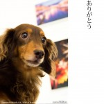 fotocolore collection 2012(本日最終日)