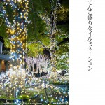 新宿イルミネーション(1)