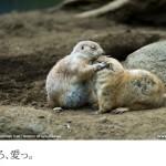 江戸川区自然動物園(2)