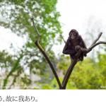 江戸川区自然動物園(3)
