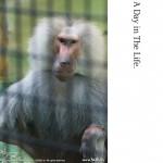 野毛山動物園(6)