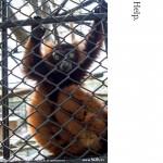 野毛山動物園(7)