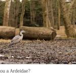 代々木公園の野鳥