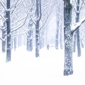 代々木公園-2014雪