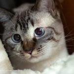 保護猫:里子がやってきた